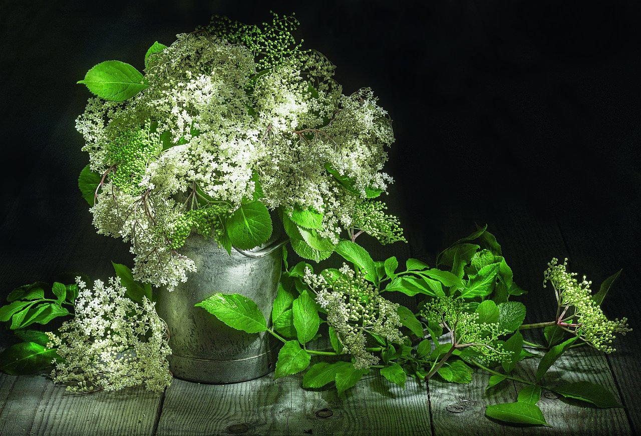 Ernst Peter Prokop, Hollunderblüten 2019, Lightpainting, Pigmentdruck auf Hahnemühle FINEART, 33x48cm