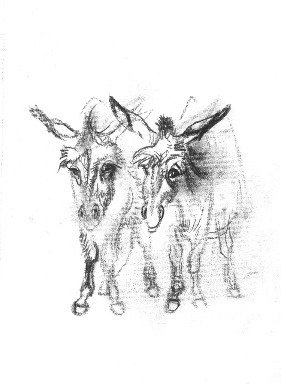 Ludwig H. Jungnickel, Two donkeys, charcoal, 32.5x23.5cm, estate stamp
